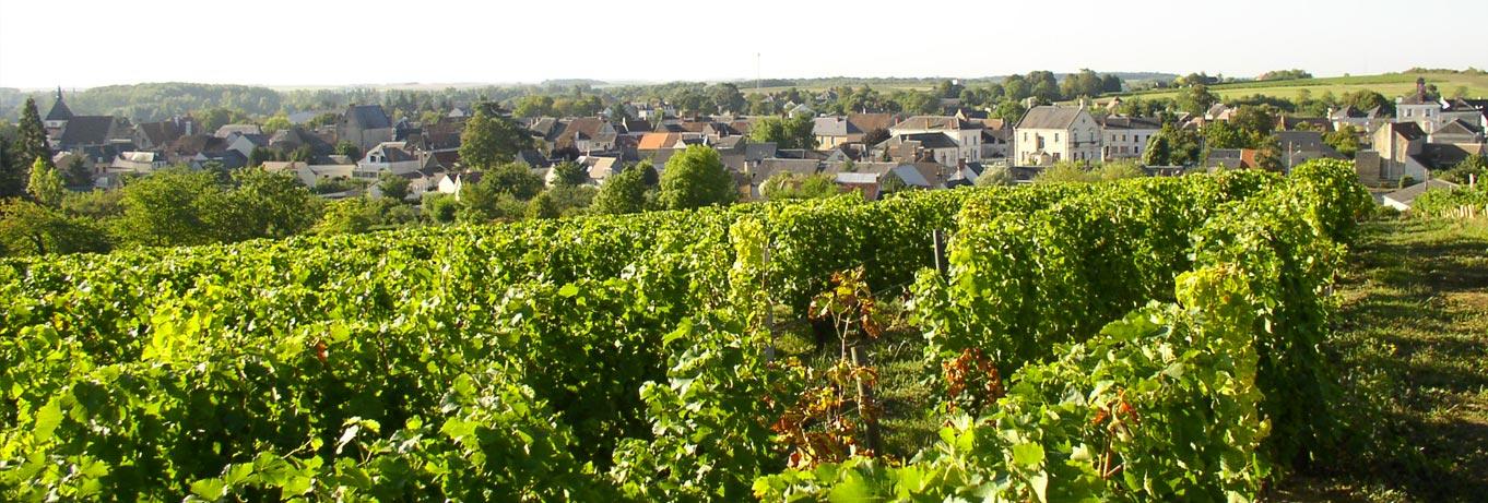 <i class='fa fa-camera' aria-hidden='true'></i> Les vignes autour de la ville