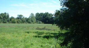 Prairies de l'Arnon
